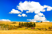 Bridesville, BC., old barn, cows, pasture