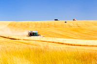 Davenport, Washington State, combine harvests grain, wheat